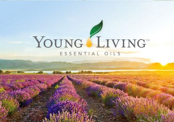 Is Young Living Oils a Scam